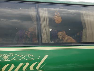 Bus_dog